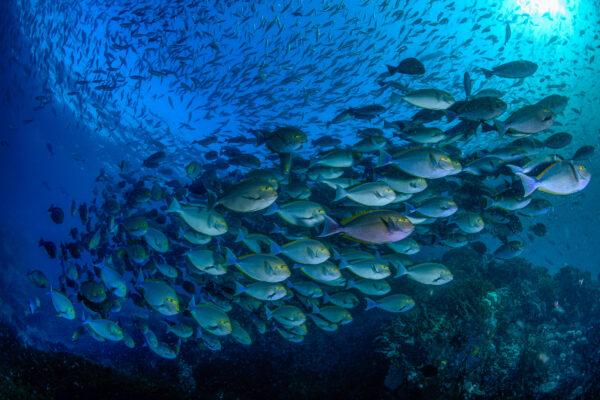 Plongée aux Raja Ampat