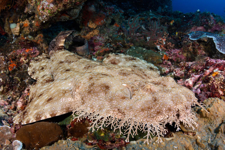 Plongée sous-marine en Indonésie