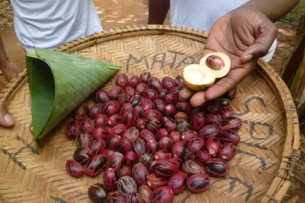 nutmegs spice islands indonesia banda sea forgottenislands