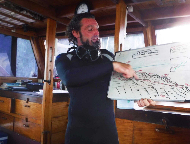 Hammerhead Shark Diving Capitaine de la croisière