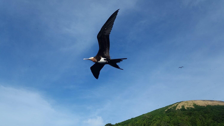 seabird-fregate-gunungapi-manuk-soangi