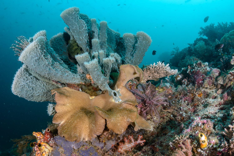 Scuba Diving Liveaboard coral
