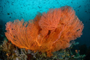 Scuba Diving Liveaboard soft coral