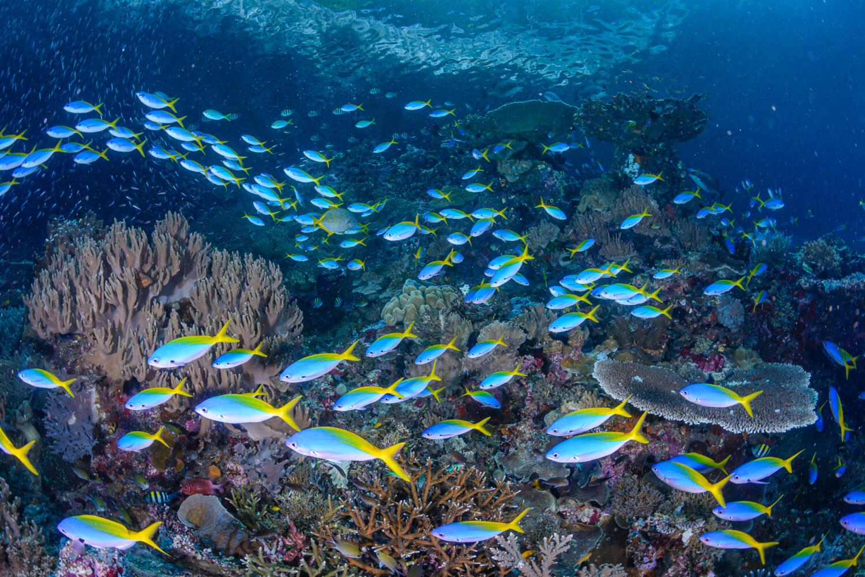 Scuba Diving Liveaboard david
