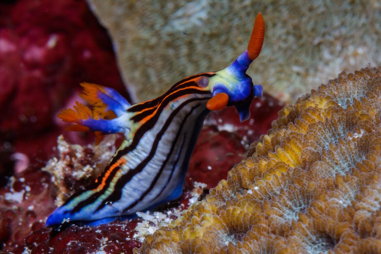 Scuba Diving Liveaboard nudi