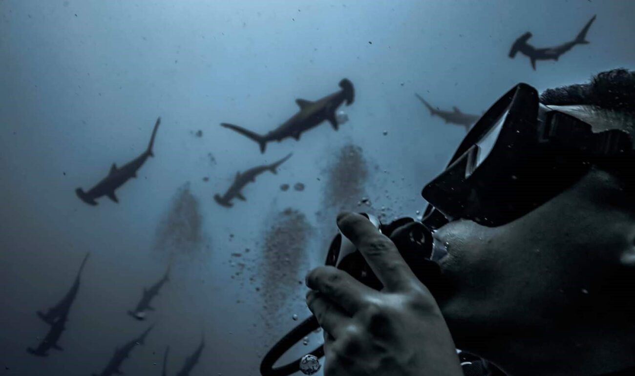 Scuba Diving Liveaboard hammerhead shark