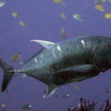 Croisière à Komodo, les sites de plongée