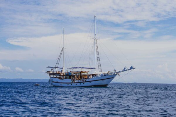 Hammerhead Shark Diving Phinisi indonesia