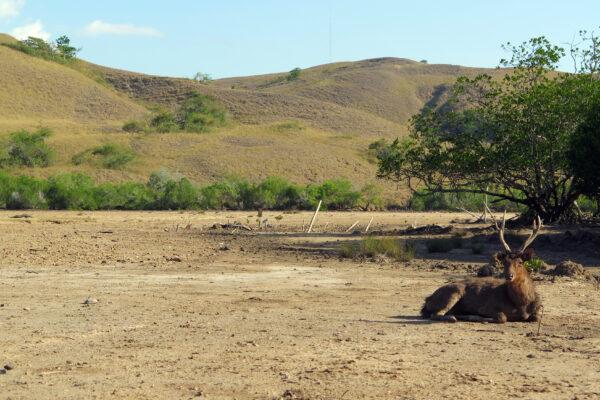 Croisière à Komodo : visite du Parc national de Komodo