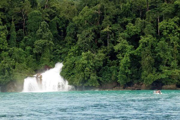 whale sharks diving cruising indonesia west papua tikitiki waterfall rainforest