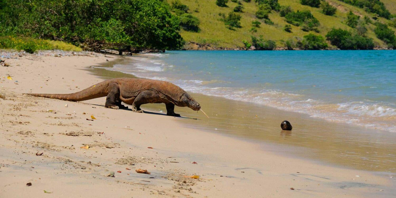 Croisière à Komodo - visite des dragons de Komodo