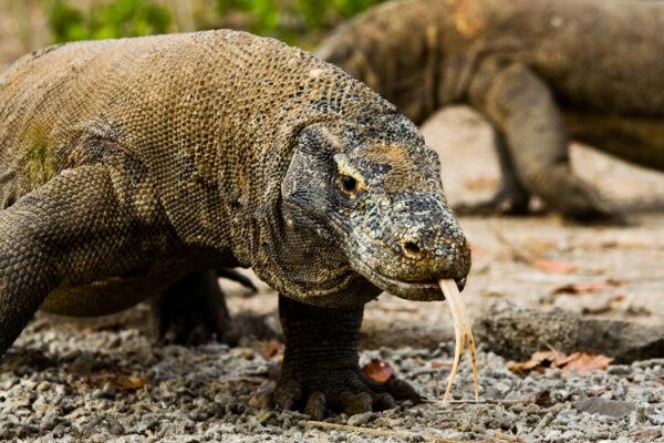 Parc national de Komodo