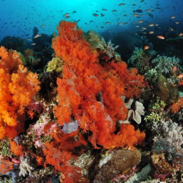 Sites de plongée à ne pas manquer à Komodo