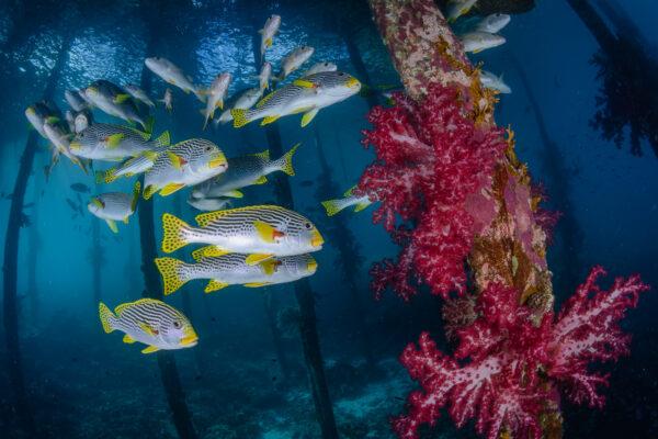 misool diving liveaboard david