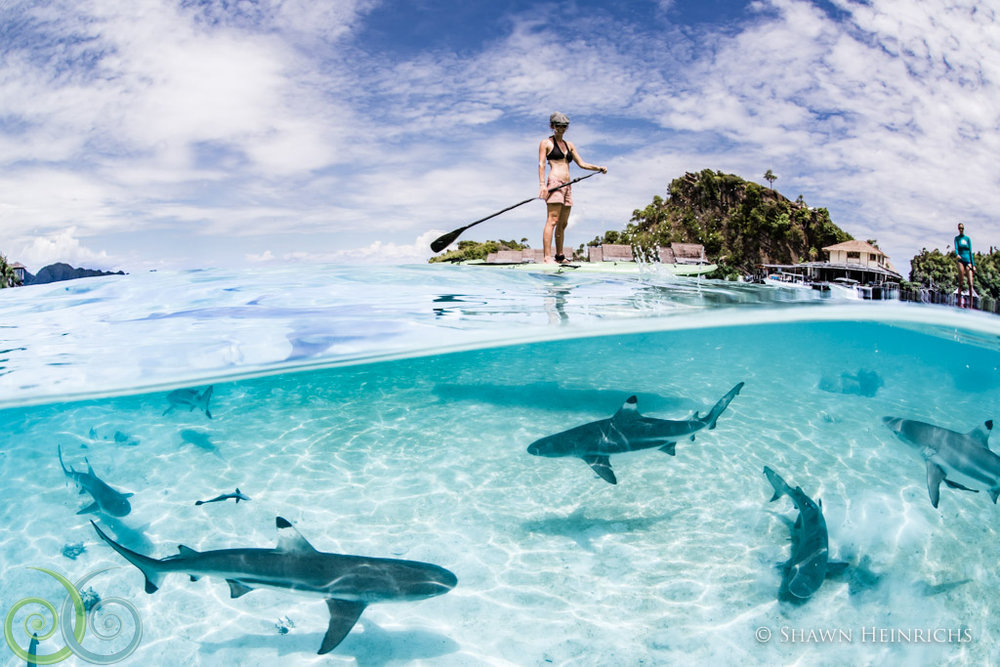 misool island shark