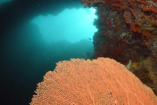 cruisingbandasea divesite bandaislands holeinthewall pulauhatta