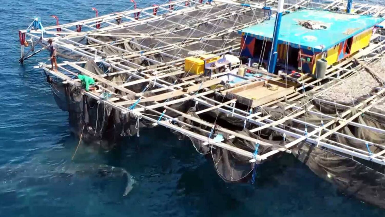 konjo cruising indonesia island cruise liveaboard scuba diving yacht charter luxury package whale shark raja ampat misool halmahera komodo hammerhead banda sea