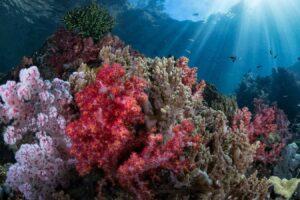 triton bay konjo cruising indonesia island cruise liveaboard scuba diving yacht charter luxury package raja ampat misool halmahera komodo hammerhead banda sea