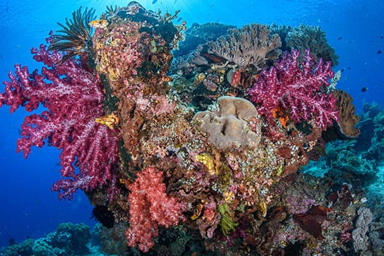 coral konjo cruising indonesia island cruise liveaboard scuba diving yacht charter luxury package whale shark triton bay misool halmahera komodo hammerhead banda sea