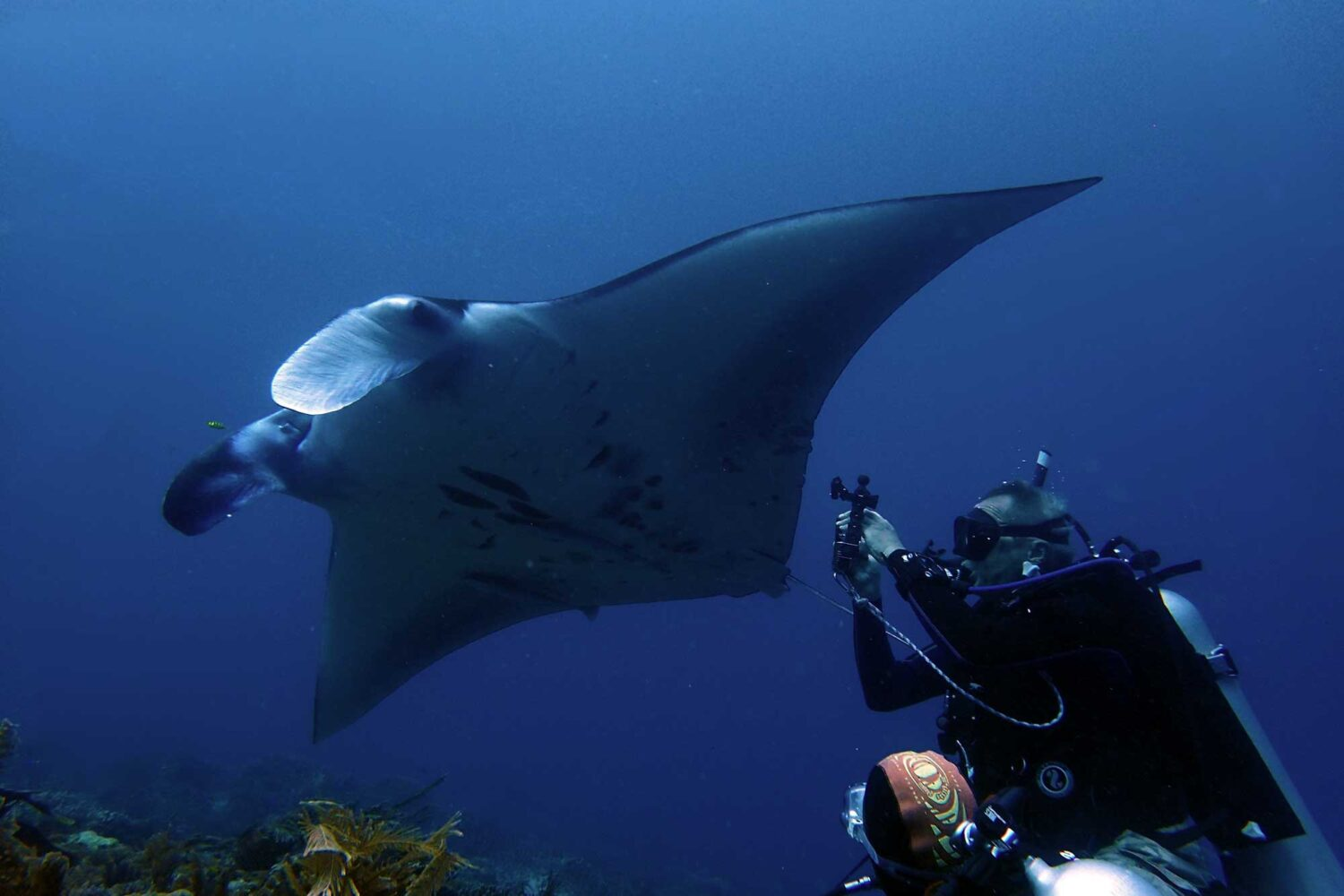 diving and cruising indonesia manta rays uw photography